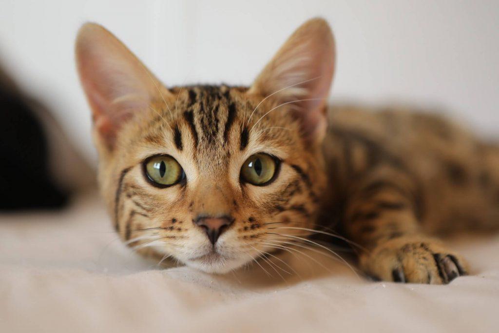 cat-4262034_1920