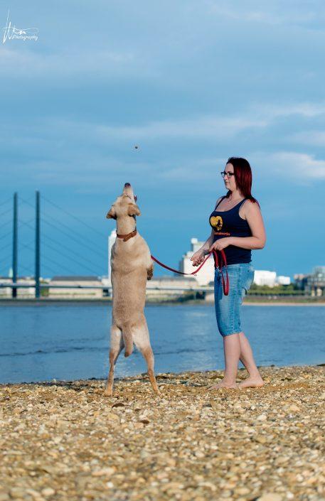 Hundetrainer mit Labrador